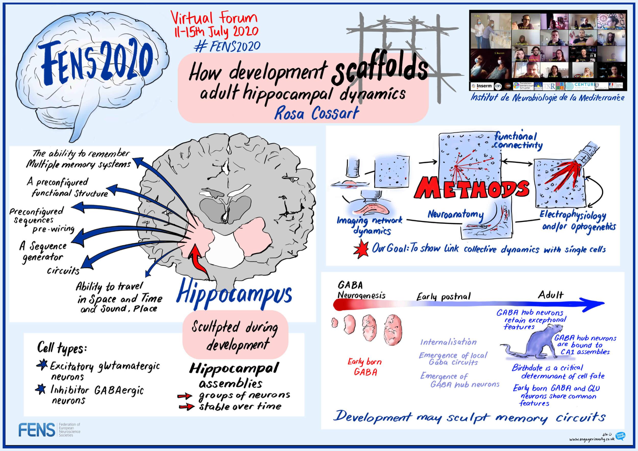 """How development scaffolds adult hippocampal dynamics"" Rosa Cossart (FR)"