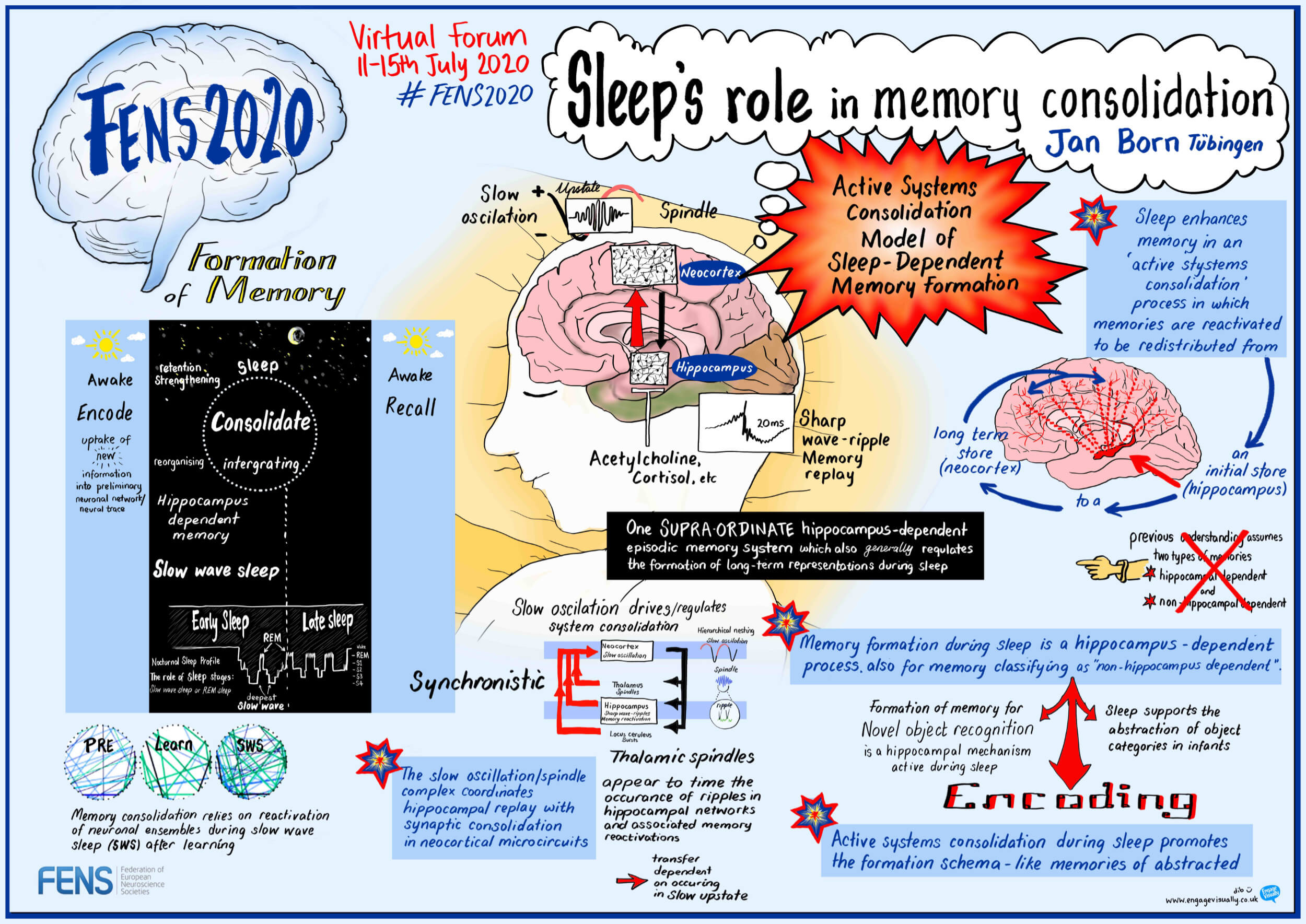 """""""Sleep's role in memory consolidation"""" by Jan Born (DE)"""